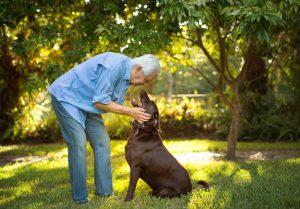 Senior man with his chocolate labrador, affection.